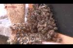 Terapi sengat lebah ala insinyur pertanian Gaza obati penyakit yang tidak bisa disembuhkan kedokteran.