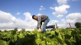 Petani Palestina bergabung dalam Gerakan Petani Internasional