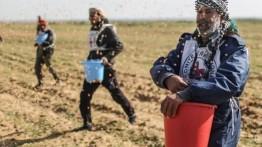 Untuk pertama kali sejak 2006 warga Palestina melakukan cocok tanam di perbatasan Gaza