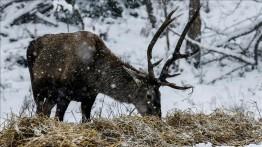 Menjelang masuknya musim dingin, Pemerintah Turki sediakan makanan untuk binatang liar