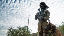 B'Tselem: Tentara Israel menggunakan anjing Belanda untuk menyerang warga sipil Palestina