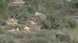 Warga Israel curi 420 pohon zaitun di Tepi Barat