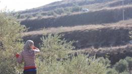Pasukan Israel cegah petani Tepi Barat panen zaitun