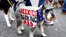 Ribuan warga Britania Raya demonstrasi di kota London dengan membawa anjing