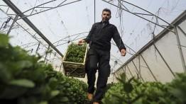 Dukung petani Gaza, PA dan Uni Eropa sediakan paket dukungan terpadu senilai € 3,7 juta