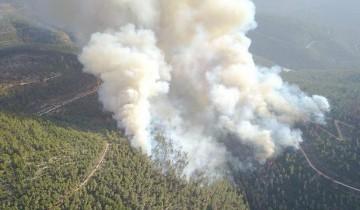 Kebakaran landa Hutan Nasional Sataf di Bukit Yerusalem
