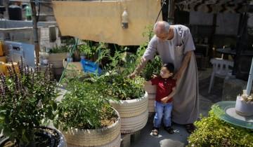 """Lahan pertanian berkurang, warga Gaza terapkan metode """"rooftop farming"""""""
