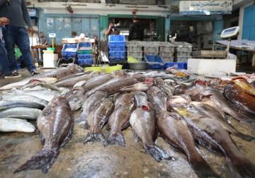 Gaza Banjir Ikan Segar dan Besar, Hasil Perikanan Palesitna